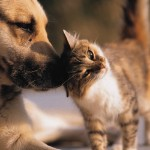Teaching Your Kids Responsibility with Pet Care