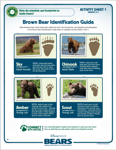 brownbearidentification