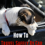 How To Travel Safely By Car with your Dog