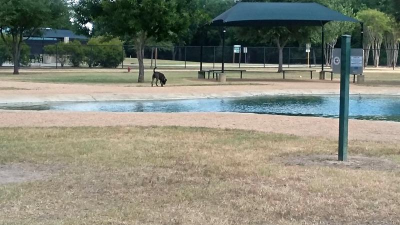 dog park2
