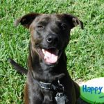 5 Secrets to a Happy Dog