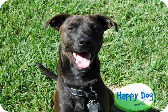 5 Secrets to a Happy Dog