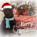 Ways to Include Your Dog in Your Holidays: Christmas Traditions