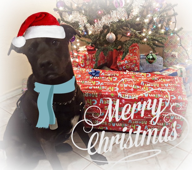 dogs-christmas-traditions