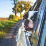 Tips on How to Make Traveling with a Pet Easier