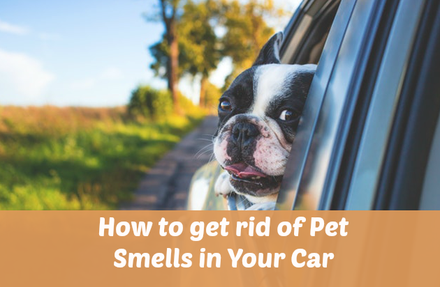 How to get rid of Pet Smells in Your Car