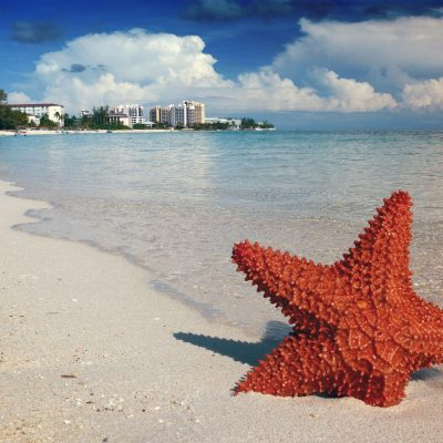 Marvelous Things to do in Nassau with the kids